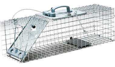 Live Raccoon Trap